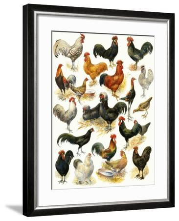 Poultry-English School-Framed Giclee Print