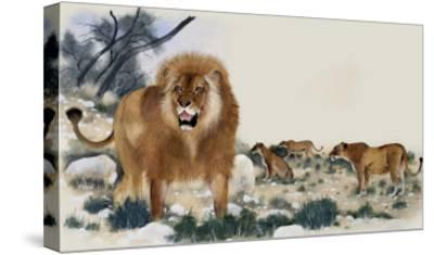 Barbary Lions-Maurice Wilson-Stretched Canvas Print