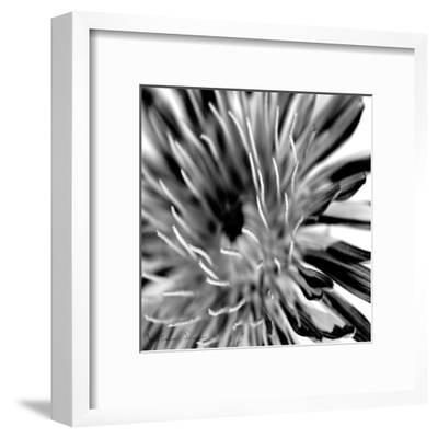 Contrastoflora IV-Jean-Fran?ois Dupuis-Framed Art Print