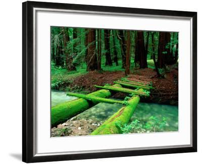 Bridge Covered in Moss over Little Sur River-Douglas Steakley-Framed Photographic Print