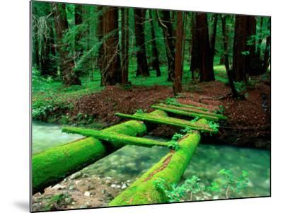 Bridge Covered in Moss over Little Sur River-Douglas Steakley-Mounted Photographic Print
