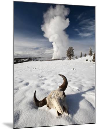Buffalo Skull and Old Faithful Geyser-Douglas Steakley-Mounted Photographic Print