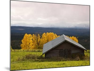 Traditional Wooden Barn, Yellow Aspens and Fjells with First Snow in Autumn-Christer Fredriksson-Mounted Photographic Print