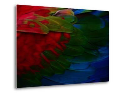 Macaw Plumage Detail-Diego Lezama-Metal Print