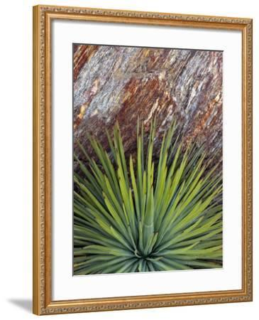 Yucca and Stone-Douglas Steakley-Framed Photographic Print