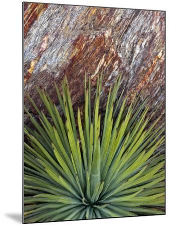 Yucca and Stone-Douglas Steakley-Mounted Photographic Print