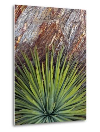 Yucca and Stone-Douglas Steakley-Metal Print