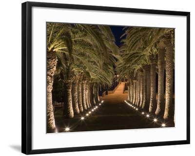 Palm-Lined Path and Pier at Night-Holger Leue-Framed Photographic Print