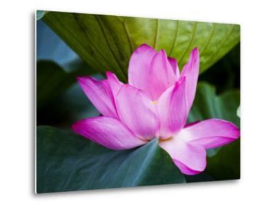 Lotus Flower Detail, West Lake-Greg Elms-Metal Print