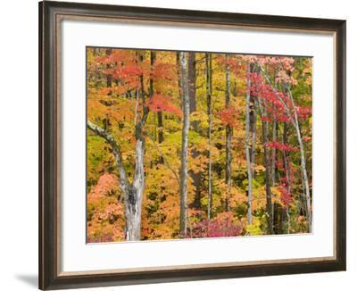 Autumn Leaves, White Mountains-Gareth McCormack-Framed Photographic Print