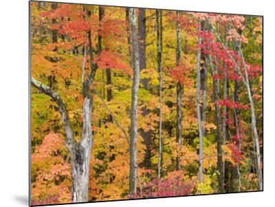 Autumn Leaves, White Mountains-Gareth McCormack-Mounted Photographic Print