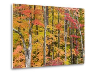 Autumn Leaves, White Mountains-Gareth McCormack-Metal Print