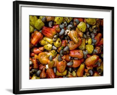 Fermenting Cashew Fruits, with Nut Attached, to Make Fenny at Sahakari Spice Farm, Ponda-Greg Elms-Framed Photographic Print
