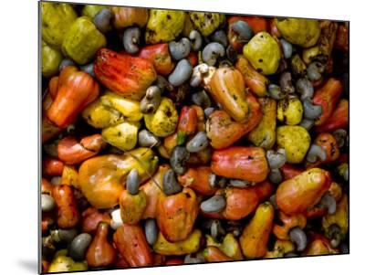 Fermenting Cashew Fruits, with Nut Attached, to Make Fenny at Sahakari Spice Farm, Ponda-Greg Elms-Mounted Photographic Print