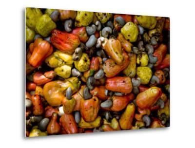 Fermenting Cashew Fruits, with Nut Attached, to Make Fenny at Sahakari Spice Farm, Ponda-Greg Elms-Metal Print