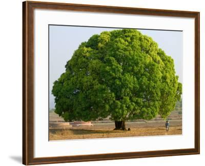 A Big Tree-Keren Su-Framed Photographic Print