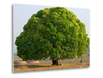 A Big Tree-Keren Su-Metal Print