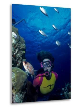 Diver Looking at Squirrelfish (Holocentrus Adscensionis) on Voral Head-Michael Lawrence-Metal Print