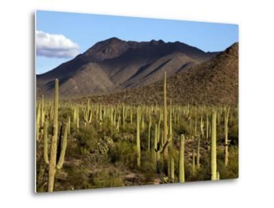 West Unit of Saguaro National Park-Mark Newman-Metal Print