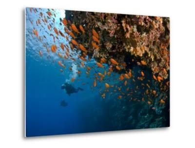 Wreck of Numidia, Big Brother Island-Mark Webster-Metal Print