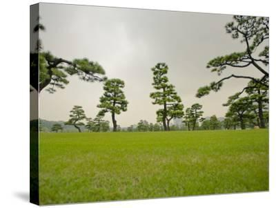 Kokyo-Gaien (Imperial Palace Gardens) Park, Covered with Pine Trees-Merten Snijders-Stretched Canvas Print