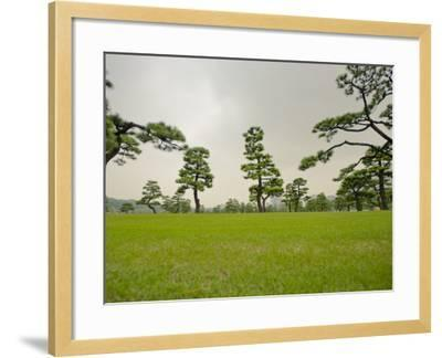 Kokyo-Gaien (Imperial Palace Gardens) Park, Covered with Pine Trees-Merten Snijders-Framed Photographic Print