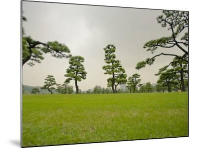 Kokyo-Gaien (Imperial Palace Gardens) Park, Covered with Pine Trees-Merten Snijders-Mounted Photographic Print