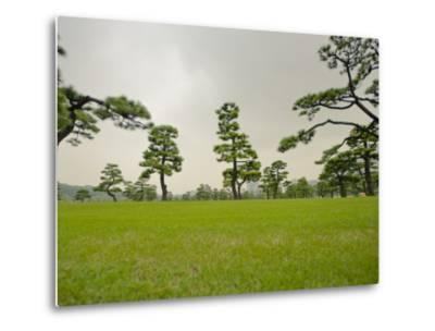 Kokyo-Gaien (Imperial Palace Gardens) Park, Covered with Pine Trees-Merten Snijders-Metal Print