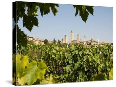 Towers of San Gimignano with Grapevines Producing Vernaccia Di San Gimignano Wine in Foreground-Olivier Cirendini-Stretched Canvas Print