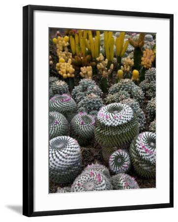 Cactus Garden in the Pine View Nursery-Antony Giblin-Framed Photographic Print