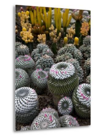 Cactus Garden in the Pine View Nursery-Antony Giblin-Metal Print