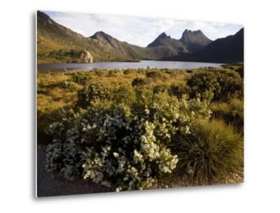 Dove Lake and Cradle Mountain-Andrew Bain-Metal Print