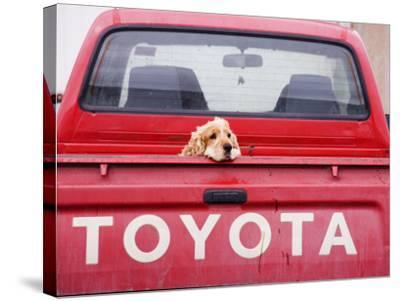 Dog Waiting on Back of Ute-Andrew Bain-Stretched Canvas Print