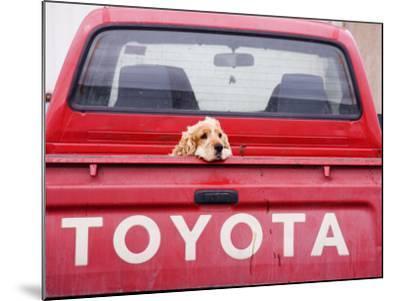 Dog Waiting on Back of Ute-Andrew Bain-Mounted Photographic Print