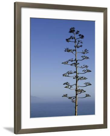 An Agave Plant (Agave Americana), Overlooking Pacific Ocean-Brent Winebrenner-Framed Photographic Print