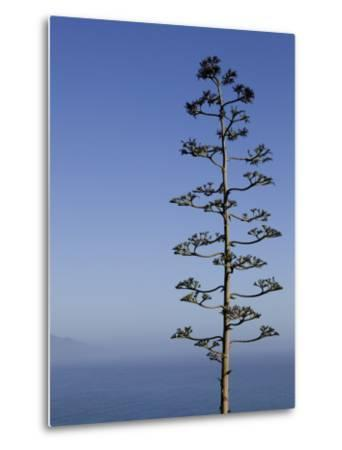 An Agave Plant (Agave Americana), Overlooking Pacific Ocean-Brent Winebrenner-Metal Print