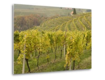 Vineyard-Richard Nebesky-Metal Print