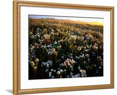 Wildflowers on West Coast-Rob Blakers-Framed Photographic Print