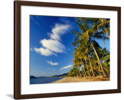 Palm Trees on Palm Cove Beach-Richard l'Anson-Framed Photographic Print