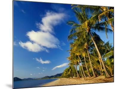 Palm Trees on Palm Cove Beach-Richard l'Anson-Mounted Photographic Print