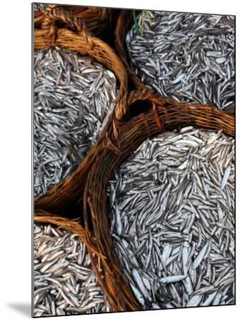 Baskets of Fish on Beach-Paul Kennedy-Mounted Photographic Print