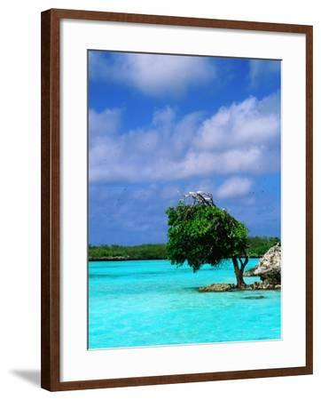 Bird on Treetop in Central Lagoon-Ralph Hopkins-Framed Photographic Print