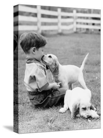 Little Boy Sitting in Grass With One Setter Puppy Licking Face and Another Lying in Grass-H^ Armstrong Roberts-Stretched Canvas Print