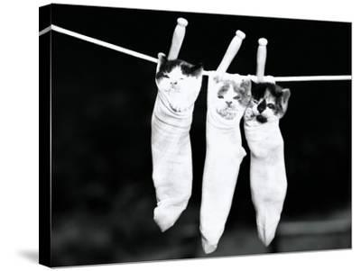 Three Kittens in Socks, Hanging From Clothes Line-H^ Armstrong Roberts-Stretched Canvas Print
