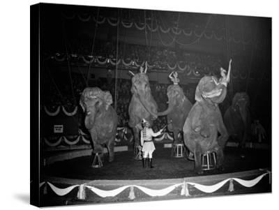 Circus Elephants-H^ Armstrong Roberts-Stretched Canvas Print