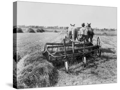 Haymaking in Canada--Stretched Canvas Print