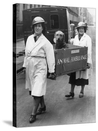 Animal Ambulance--Stretched Canvas Print