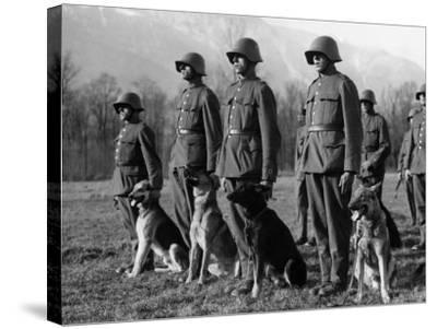 Army Dogs--Stretched Canvas Print