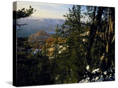 Bristlecone Pines Above Cedar Breaks at Sunset in Wintercedar Breaks National Monument, Utah, USA-Scott T^ Smith-Stretched Canvas Print