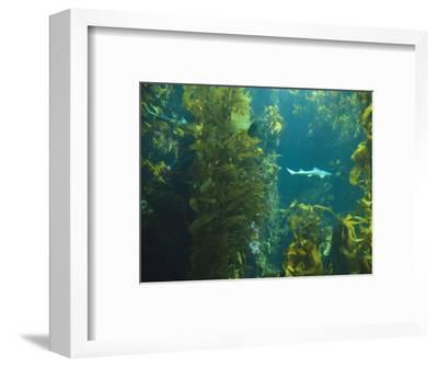 Monterey Bay Aquarium, Cannery Row, Monterey, Central California Coast, USA-Stuart Westmorland-Framed Photographic Print